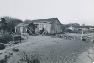 A black and white photgraph of a run down farm and barn on Harkers Island.